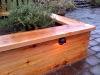 Raised cedar landscape bed with new plantings and built-in lighting, Ballard, Ecoyards.