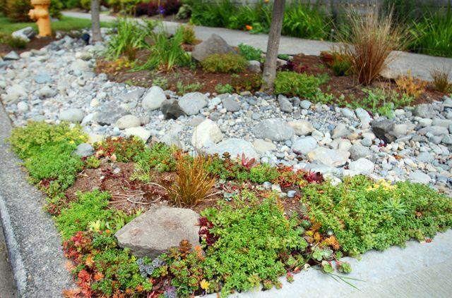 Pruning Japanese Maples Ecoyards