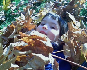 Sherridan in Leaves
