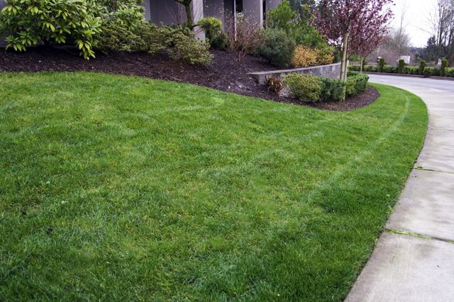 Natural Lawn Care Seattle