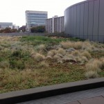 Green roof at the Seattle Justice Center, 600 Fifth Ave., Seattle. Photo by Ecoyards
